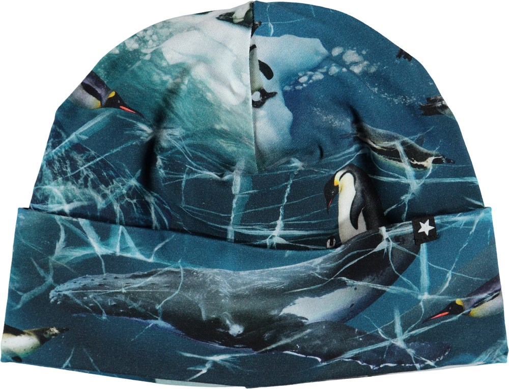 Nico - Antarctica - Hat with penguins.