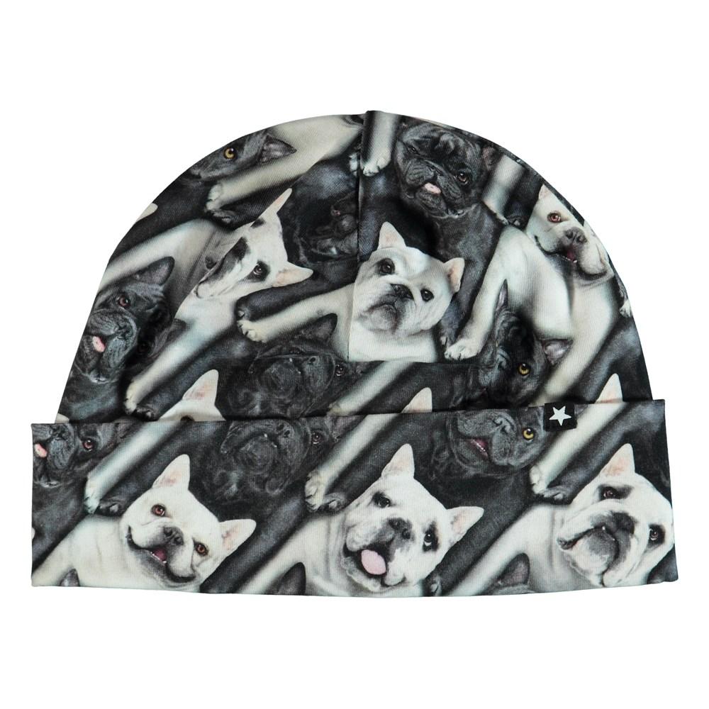 Nico - English Bulldog - Hat