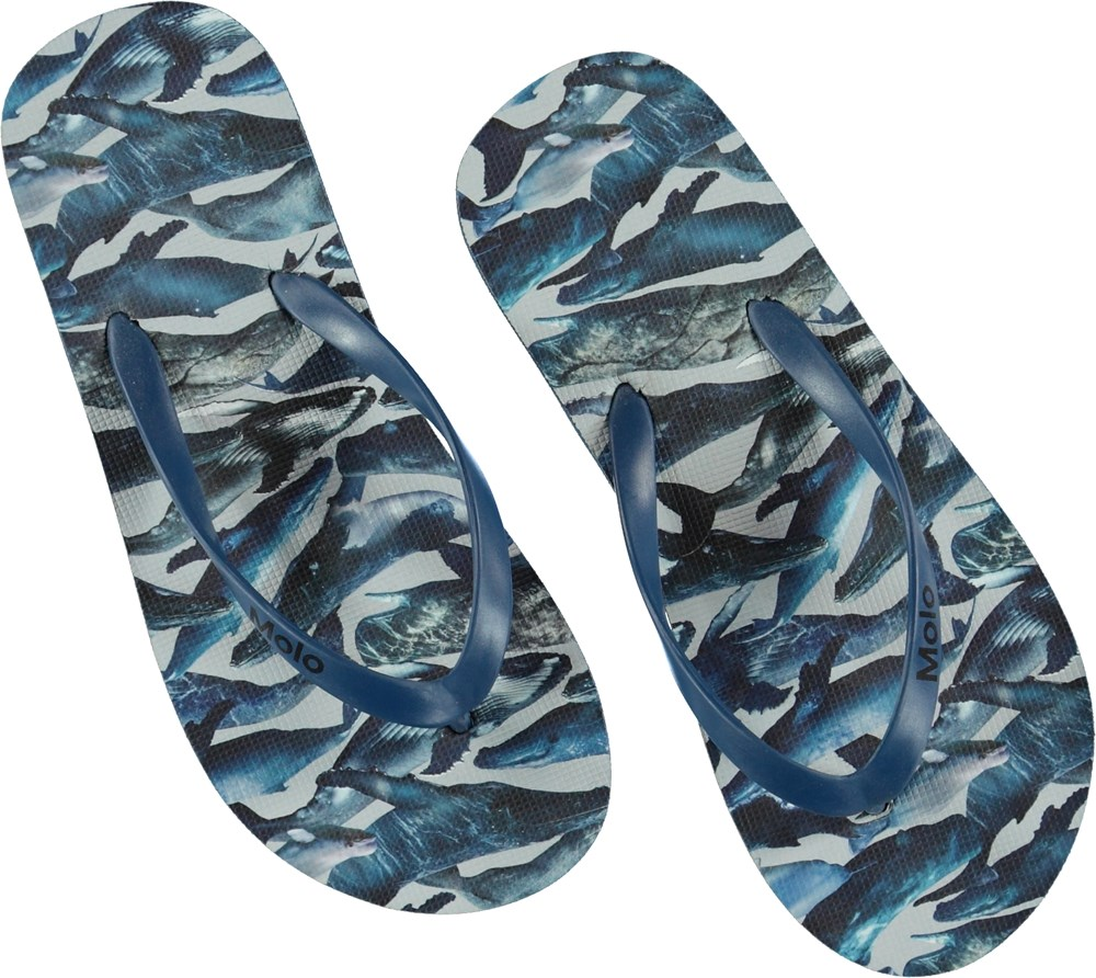 Zeppo - Whales - Flip-flops
