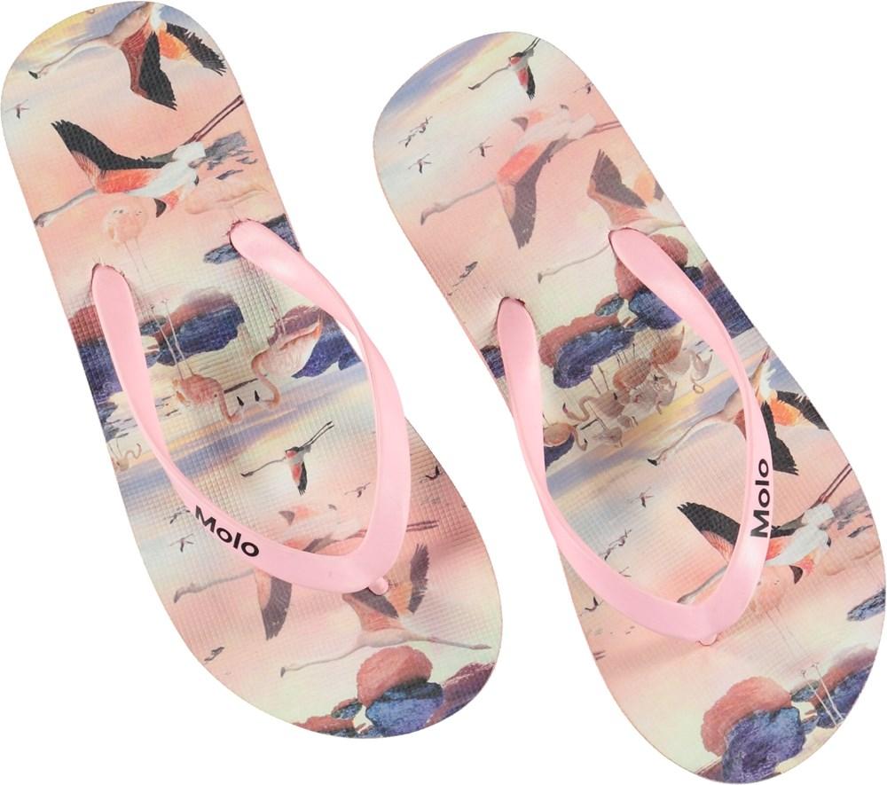 Zeppo - Flamingo - Klipklapper med flamingoer.