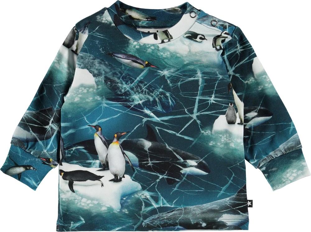 Eloy - Antarctica - Baby bluse med pingviner.
