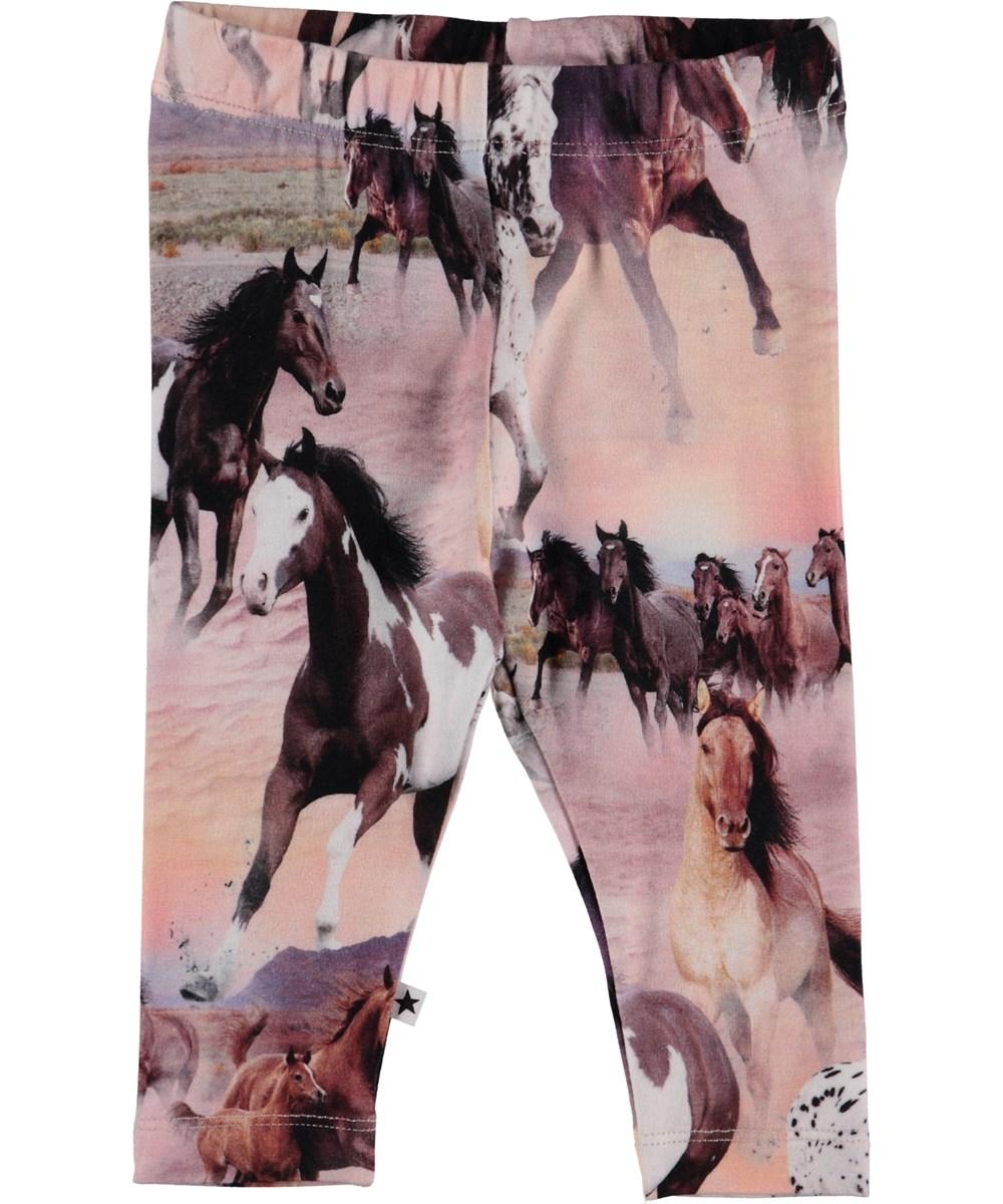 Stefanie - Wild Horses - Baby Leggings