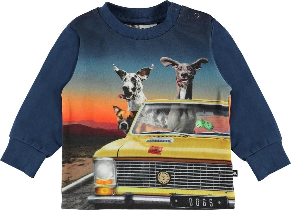 Eloy - Canine Cruise - Ekologisk baby sweatshirt med hundar