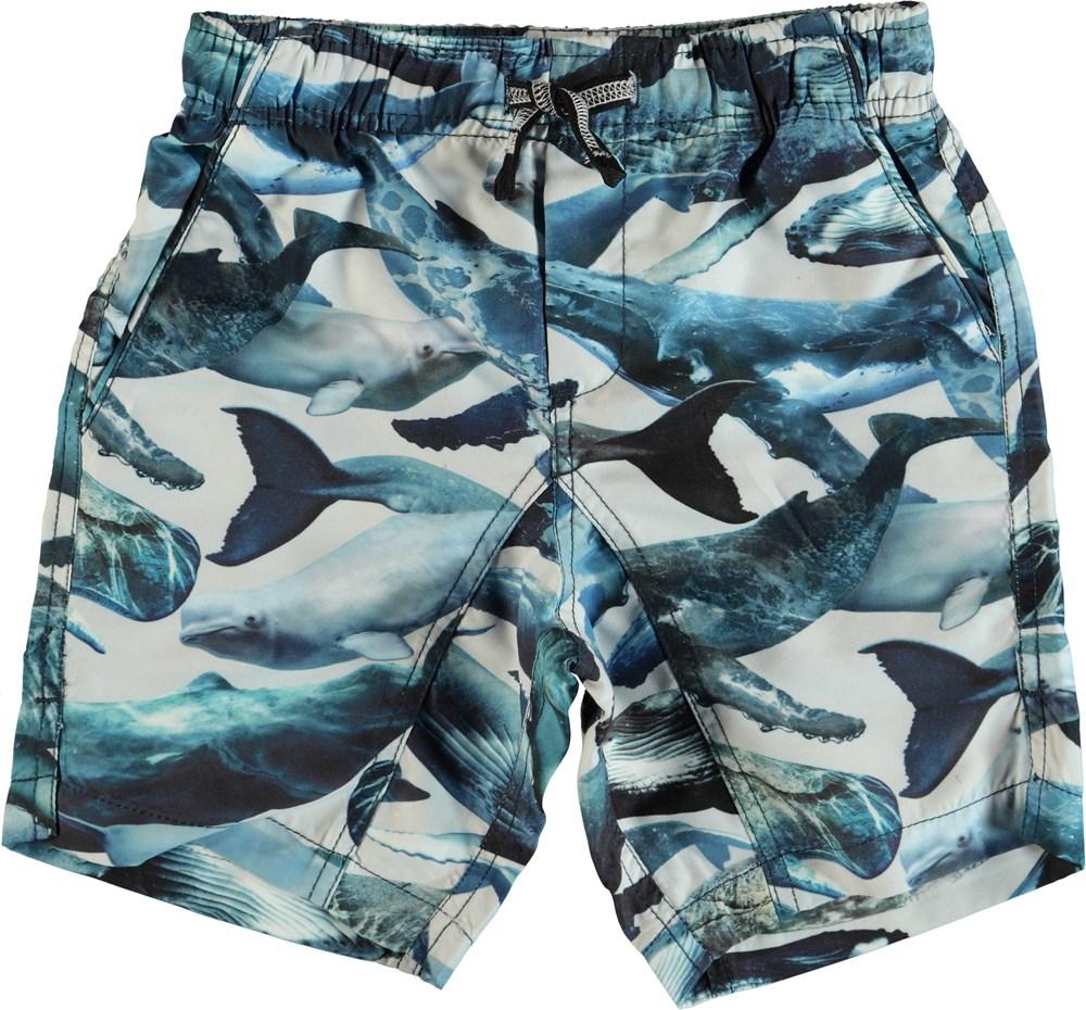 Nario - Whales - Badeshorts med lomme bagpå