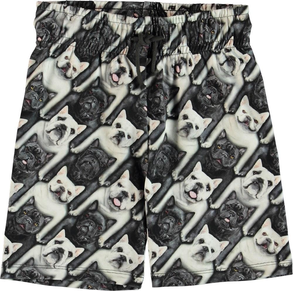 Alim - English Bulldog - Shorts