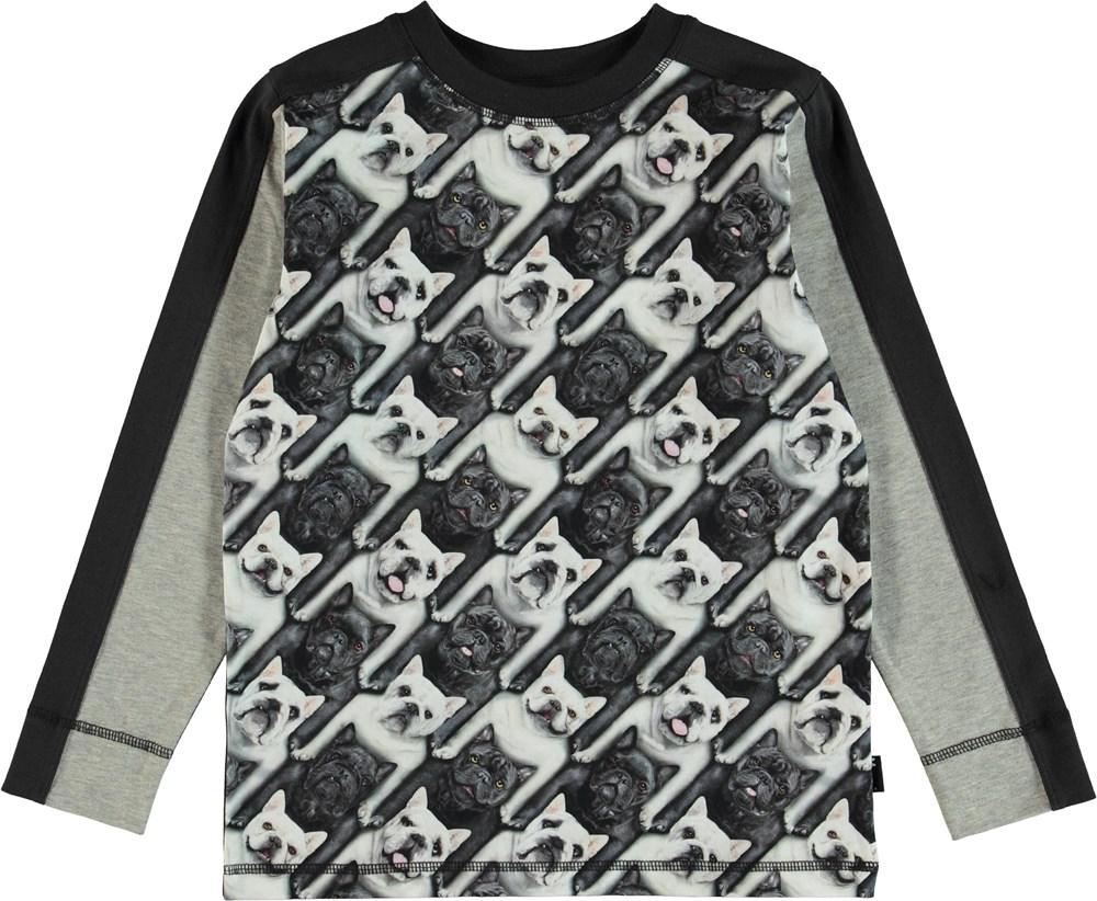 Raso - English Bulldog - T-Shirt