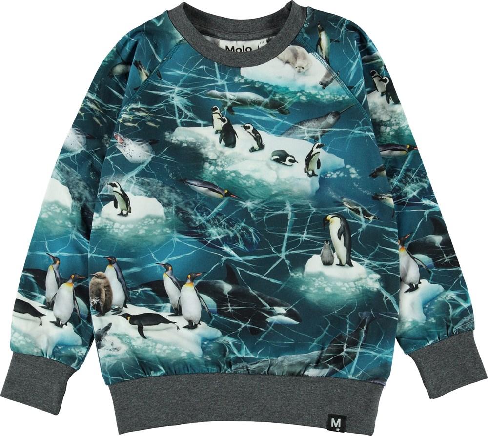Romeo - Antarctica - Blå bluse med pingviner.