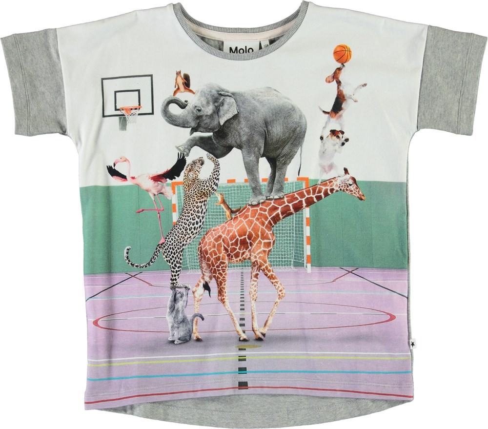Raeesa - Animal Pyramid - Ekologisk grå t-shirt med djur.