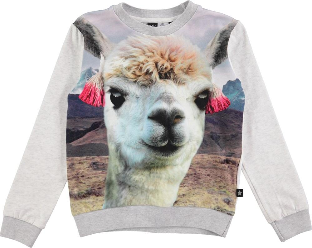 Magine - Lama - sweatshirt med lamaprint